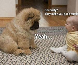 Seriously Dog funny picture