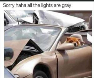 sorry all the lights are grey