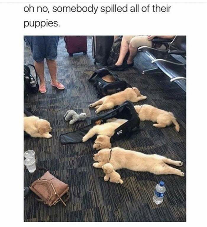 spilled my puppies