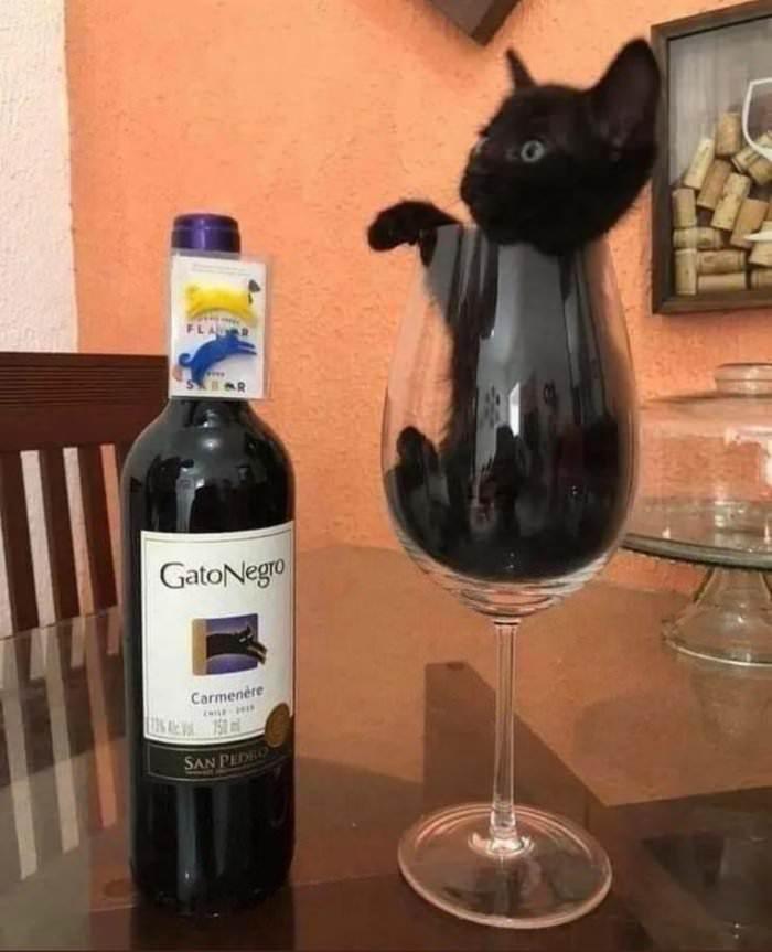 the-black-cat.jpg