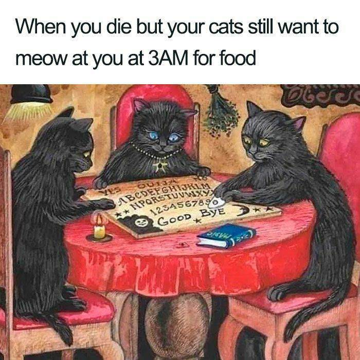 the cats still want to meow
