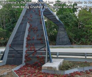 the crab bridge