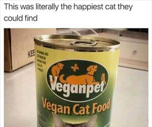 the happiest cat they could find