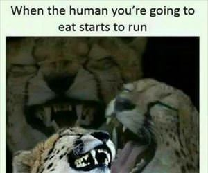 the human you will eat