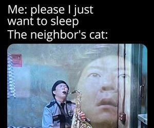 the neighbors cat