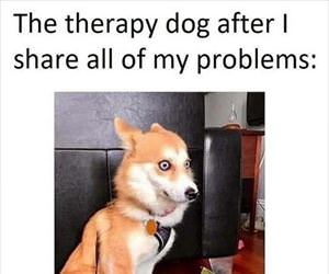 the therapy dog ... 2