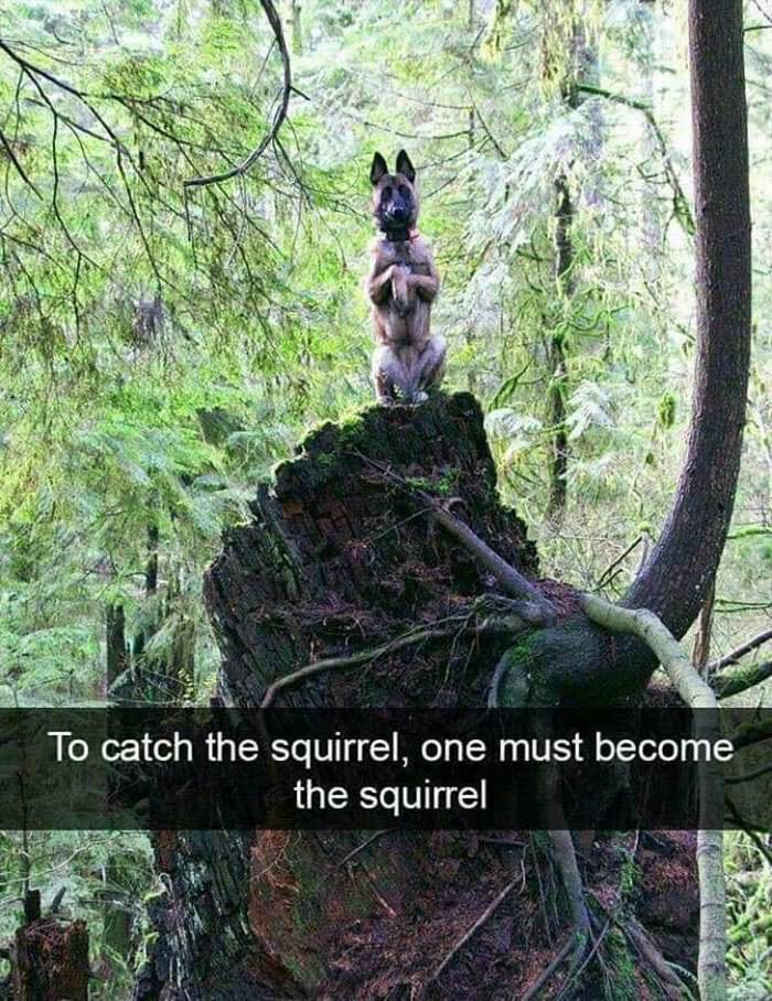 to catch a squirrel ... 2