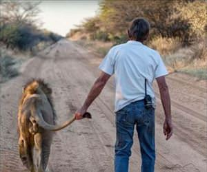 walking his lion