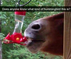 what kind of hummingbird is this