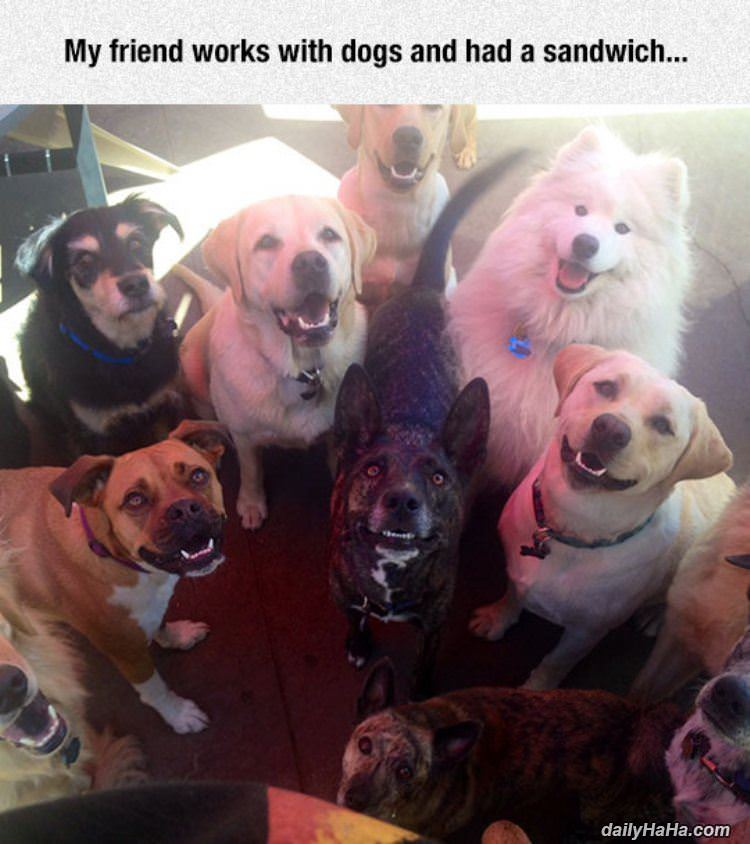 works with dogs funny picture