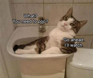 you need to pee funny picture