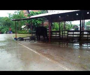 Baby elephant having fun in the rain Funny Video