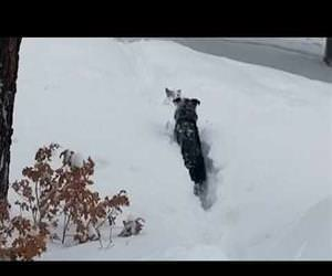 Dog needs a little help after massive dumping of snow Funny Video