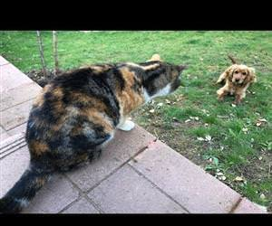 Our cats never let the neighbors dog enter our garden Funny Video