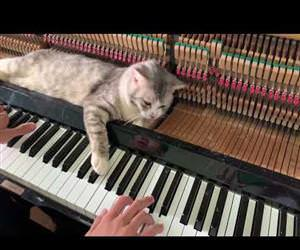River flows in MEOW - Piano relax Funny Video