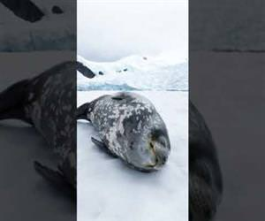Seal makes strange sounds while sleeping Funny Video