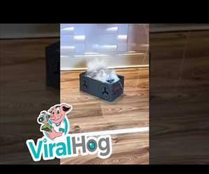 a funny cat in a box Funny Video