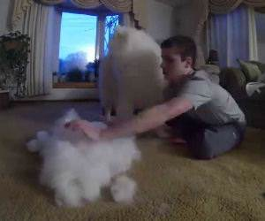 a lot of fur Funny Video