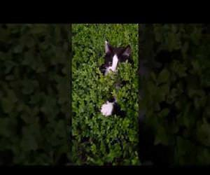 bush full of kittens playing peekaboo Funny Video