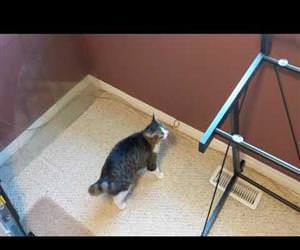 cat is very confused by missing glass Funny Video