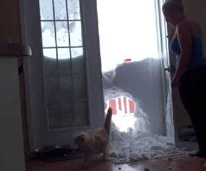 cat jumps through snow to get food Funny Video