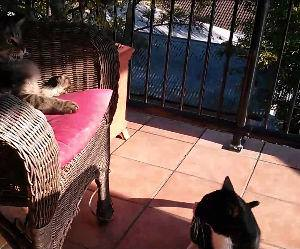 cats can be jerks Funny Video