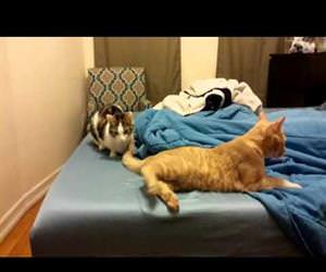 couples therapy for cats Funny Video