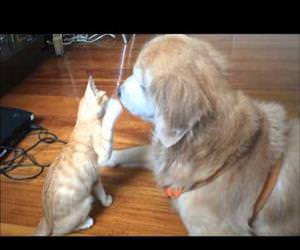 dog and cat are best friends Funny Video