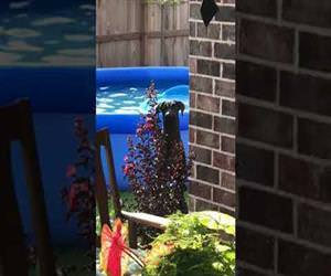 dog is caught playing in the pool Funny Video