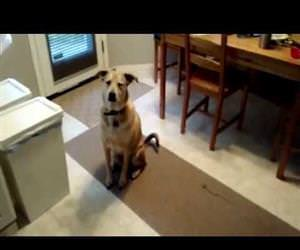 dog is excited for food Funny Video