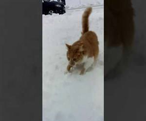 dog pushes cats face into the snow Funny Video