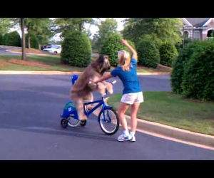 dog riding a bike by himself Funny Video