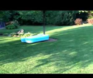 dog runs away with pool Funny Video