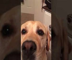 dog singing i love you in harmony Funny Video