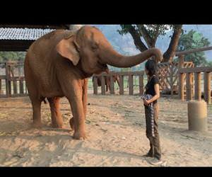 elephant lullaby Funny Video