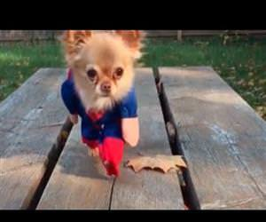 heroic dogs Funny Video