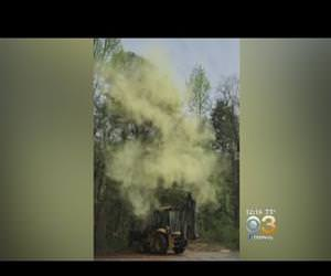 how much pollen really comes out of a tree Funny Video
