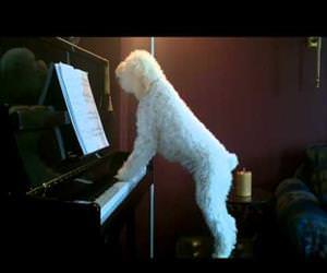 jazzy the dog playing piano Funny Video
