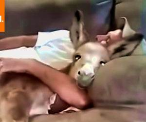 just me and my pet donkey Funny Video