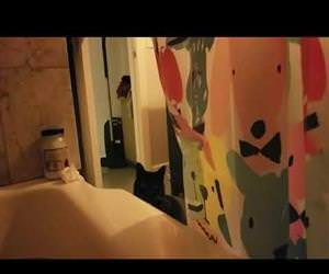 kitty hates singing in the bathtub Funny Video