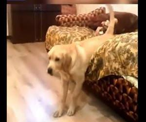 lazy dog getting out of bed Funny Video