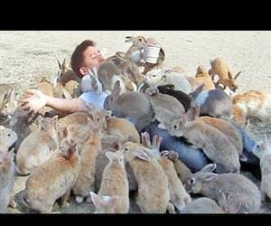 man is smothered by bunnies Funny Video