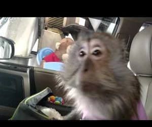 monkey has a fun time in car wash Funny Video