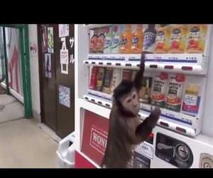 monkey using a vending machine Funny Video