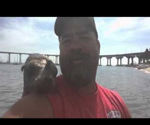 sea lion wants to be friends Funny Video