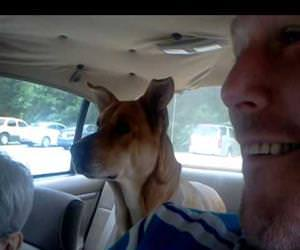 the dog realizes he is going to the vet Funny Video