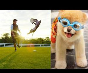 the incredible dog challenge Funny Video