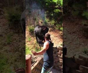 this bear really wants some barbeque Funny Video