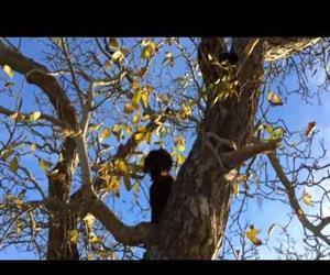 this dog climbs trees Funny Video