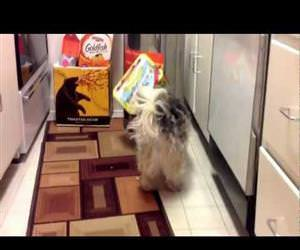 this dog loves getting his head stuck Funny Video